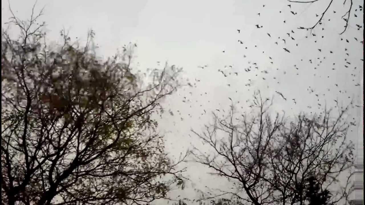 birds_trees