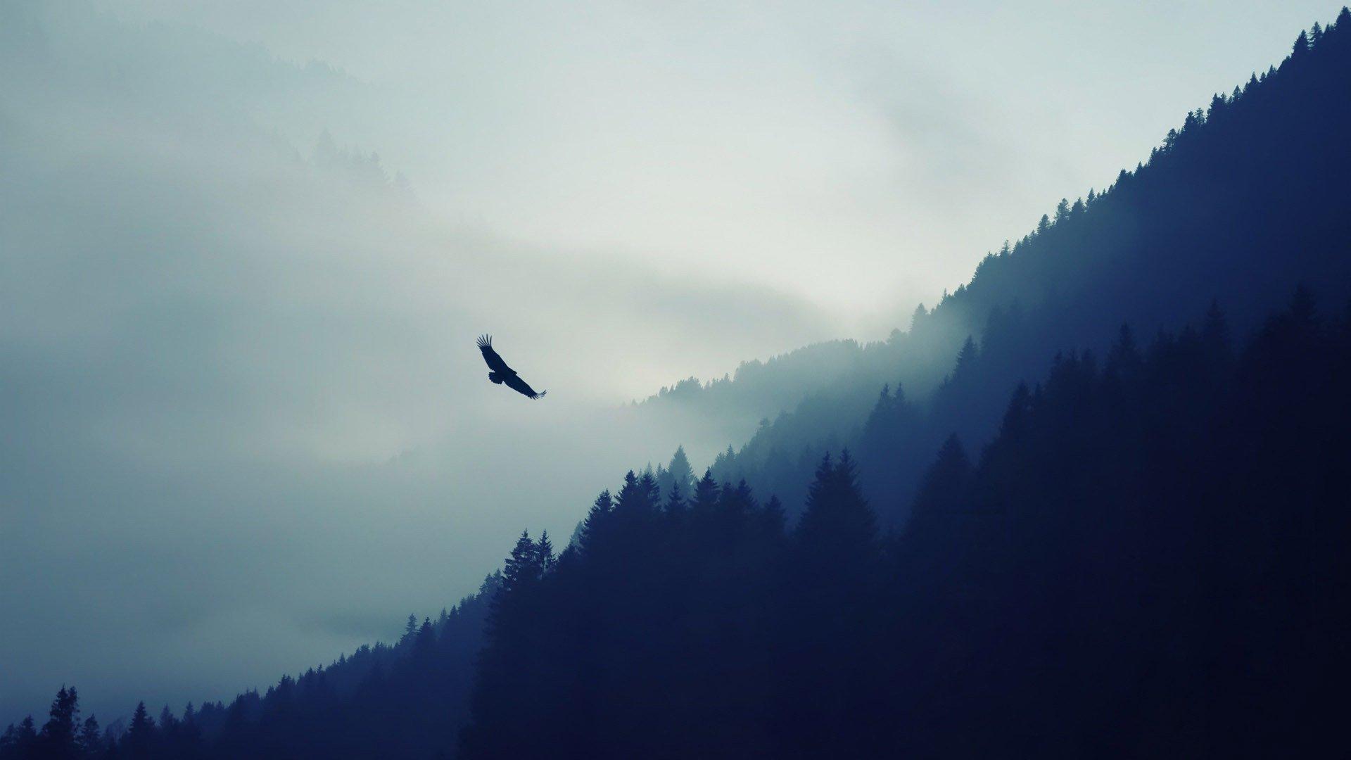eagle-bird-mountain-forest