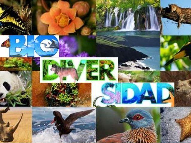 biodiversidad-biologia
